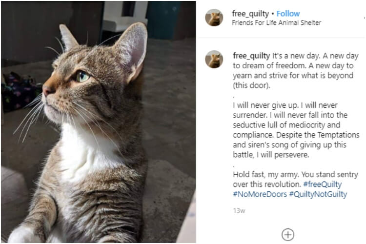 Quilty The Cat