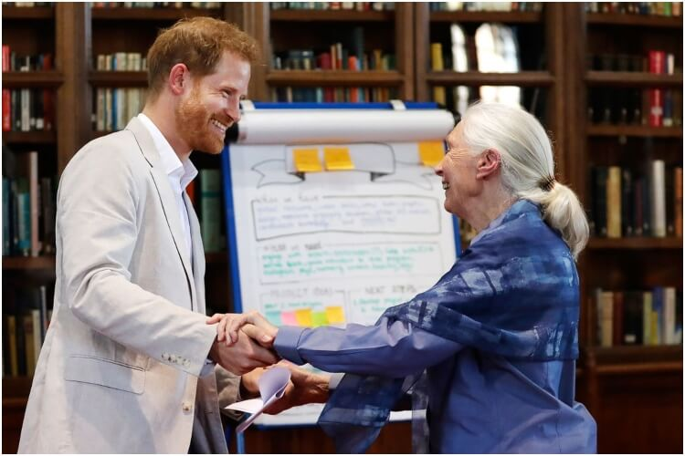 Prince Harry Jane Goodall