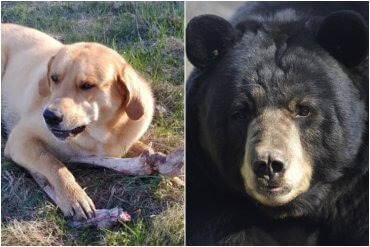 Dog and Bear Trade Bones For Trash